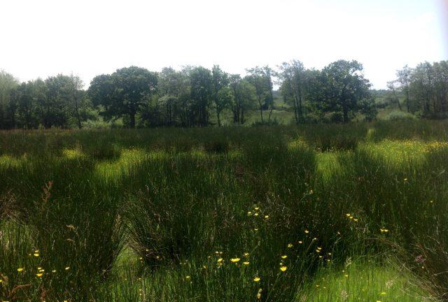 Lower Newland Moor, Wheatland Farm Devon Eco Lodges, May 16